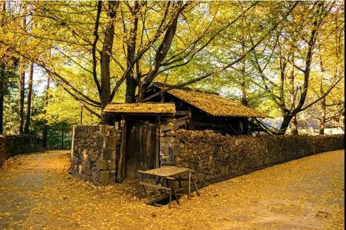 12月5日活动召集|腾冲银杏—大理—丽江—泸沽湖—最美的秋色银杏村8日自驾